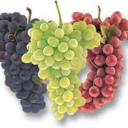 tipi uva