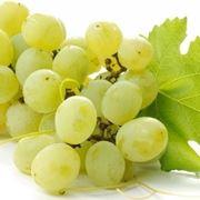 uva bianca