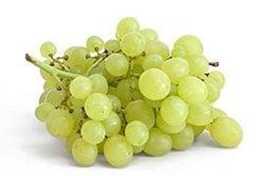 Uva da tavola vite - Vivai uva da tavola ...