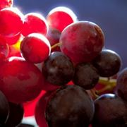 l uva fogarina