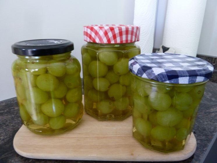 Uva sotto grappa vite come preparare uva sotto grappa for Uva fragola in vaso