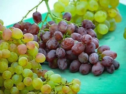 Variet uva da tavola vite - Piante uva da tavola ...