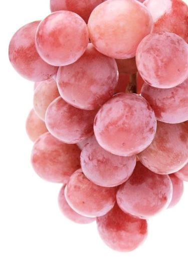 vite uva