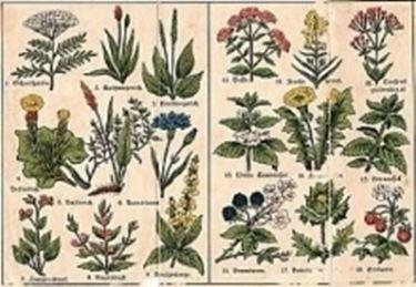 botanicafarmaceutica1