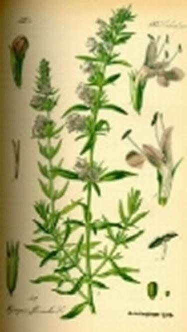 botanicafarmaceutica2