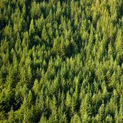 Gli alberi sono i principali produttori di ossigeno sulla Terra