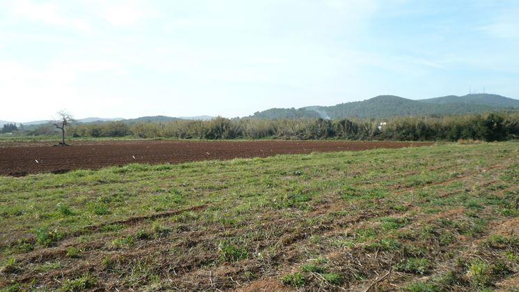 Terreno adatto coltivazione