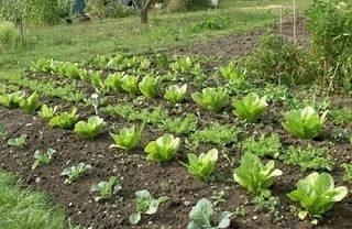 concimare l orto