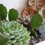 concime-piante-grasse