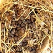 concimi fertilizzanti