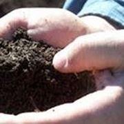 fertilizzantenaturale
