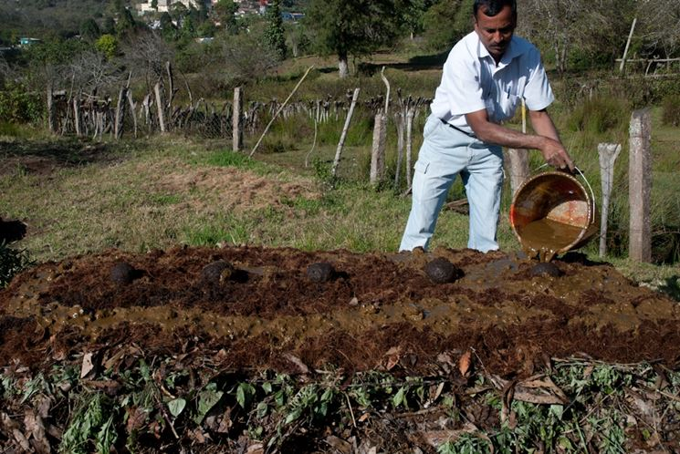 Distribuzione concime organico