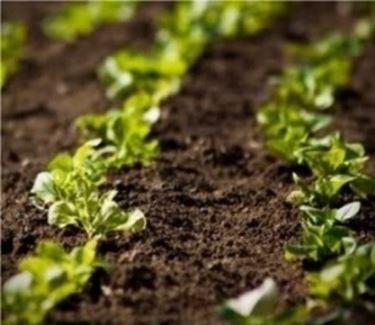 fertilizzante1