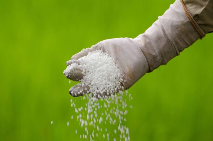 urea fertilizzante
