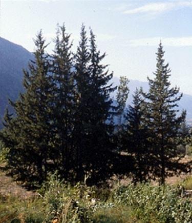 foto alberi