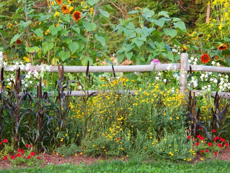 Giardino con piante fiorate