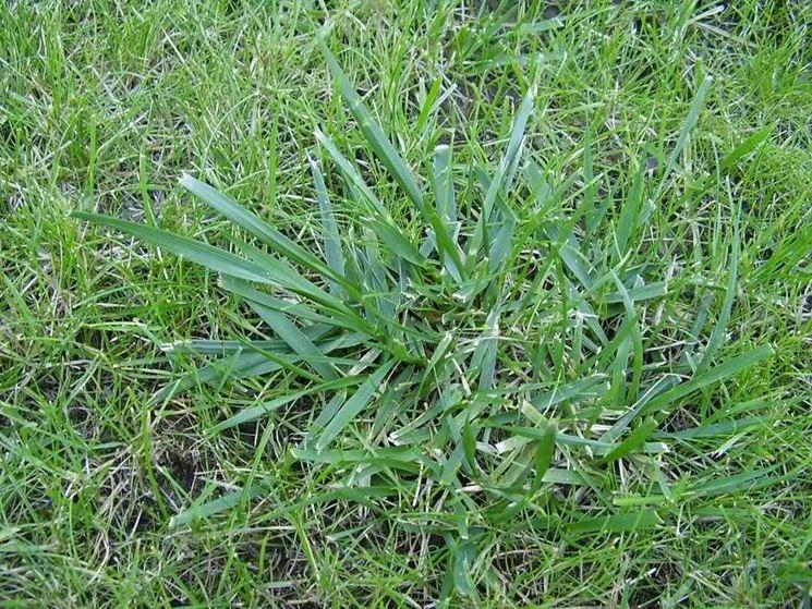 Diserbante selettivo giardinaggio caratteristiche del - Quando seminare erba giardino ...
