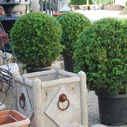Diserbante selettivo giardinaggio caratteristiche del for Alberelli da esterno
