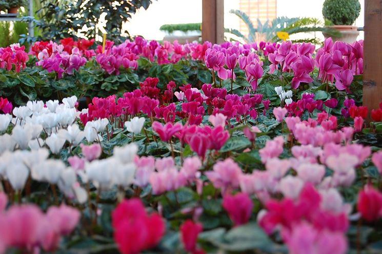 Particolari fiori da esterno
