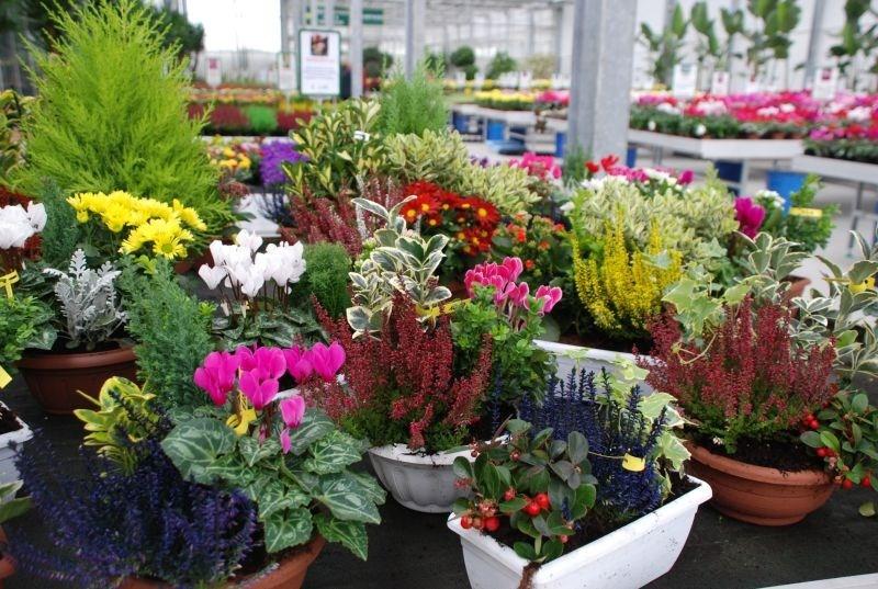 Fiori da esterno giardinaggio fiori da esterno for Fiori ornamentali da esterno