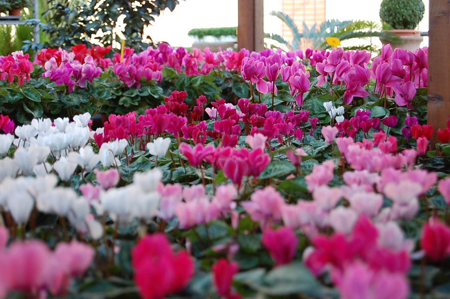 fiori da esterno giardinaggio fiori da esterno