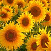 fiori da esterno