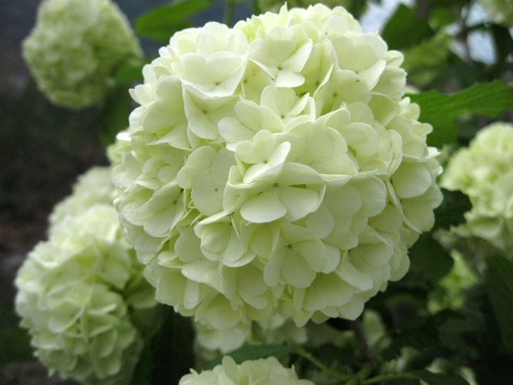Fiori da giardino giardinaggio fiori per il giardino - Piante a cespuglio da giardino ...