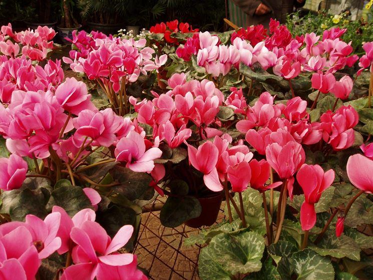 Fiori da giardino - giardinaggio - Fiori per il giardino