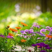fiori giardino