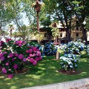 grossi fiori da giardino