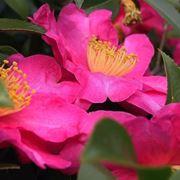 fiori da giardino giardinaggio fiori per il giardino