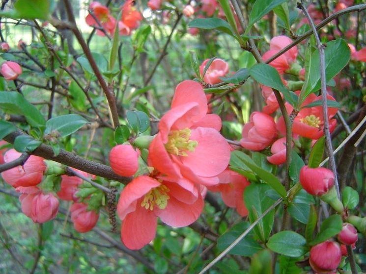 Giardini in fiore giardinaggio giardini fioriti for Piante che fioriscono in inverno