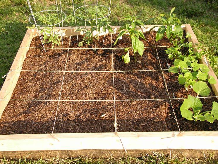 Giardinaggio fruttifero