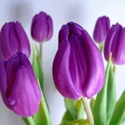 immagini di fiori da scaricare