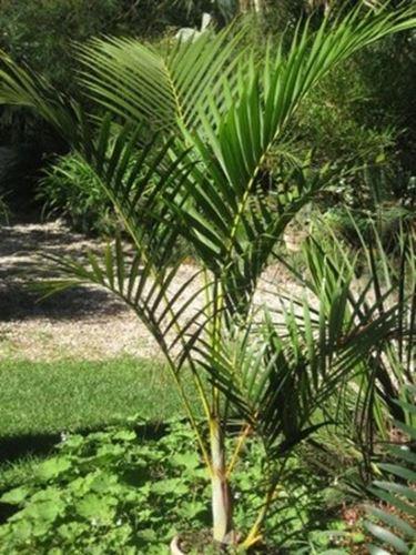 pianta da giardino