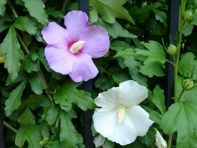 Le piante da giardino giardinaggio caratteristiche for Fiori da esterno