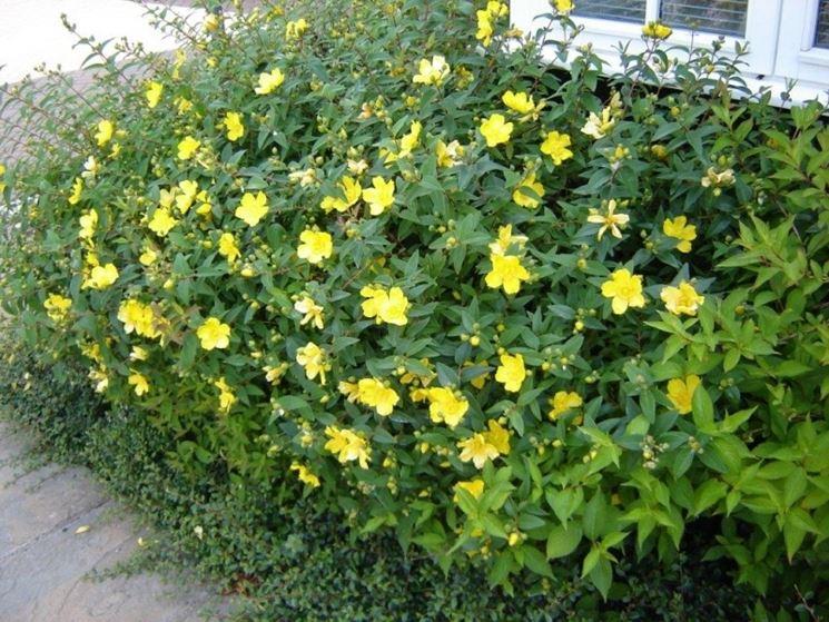Manutenzione giardini giardinaggio come tenere in for Cespugli giardino