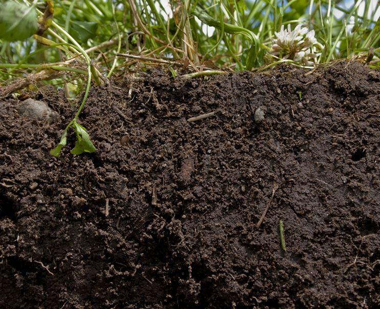Un ottimo terreno ricco in humus
