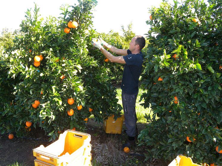 Coltivare alberi frutto