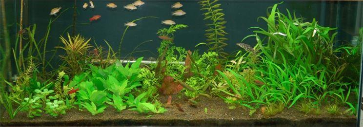 Torba usata in un acquario