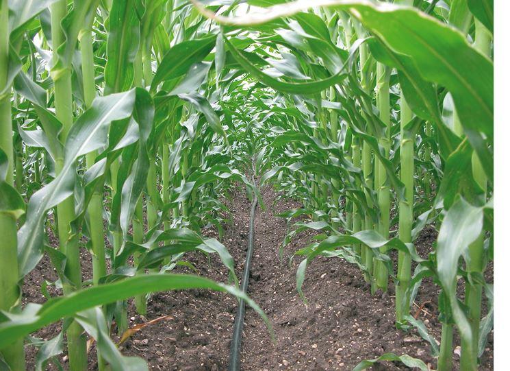 Impianto a goccia impianto irrigazione irrigazione a for Sistema irrigazione a goccia
