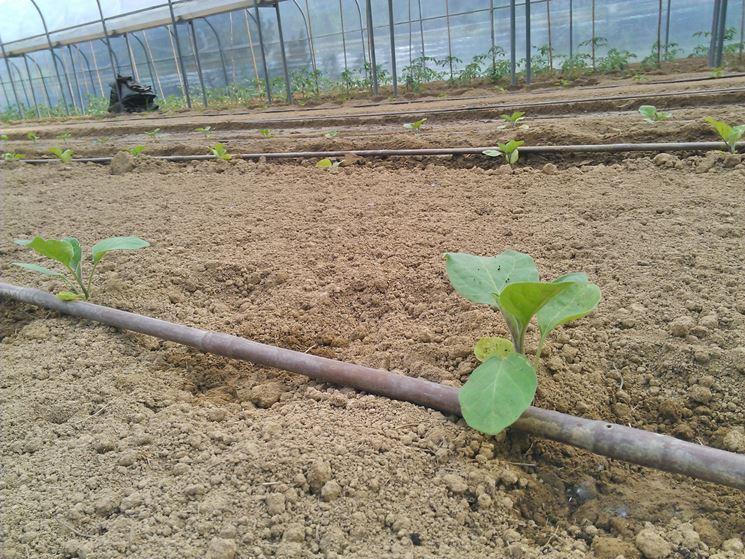 impianto a goccia impianto irrigazione irrigazione a