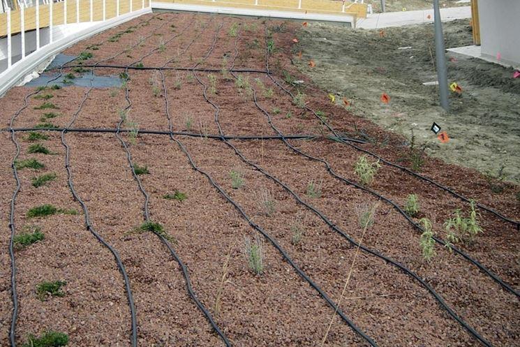 Impianto di irrigazione a goccia
