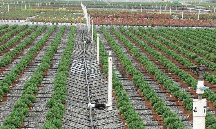 Impianto di irrigazione a goccia impianto irrigazione for Impianto irrigazione vasi