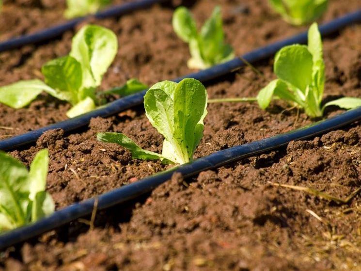 impianti irrigazione campo ortaggi