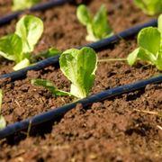schema impianto irrigazione giardino