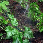sistema irrigazione giardino