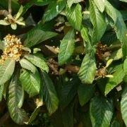 alberofrutti