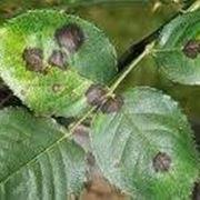 Malattie piante da appartamento
