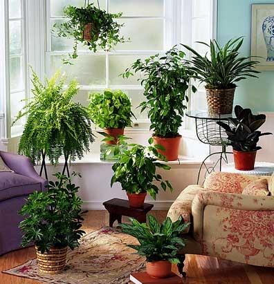 Malattie piante da appartamento malattie delle piante for Piante e fiori da appartamento